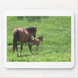 Get a Kick out of Life Horses Mouse Pad
