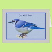 Get Well Card with Blue Jay Bird
