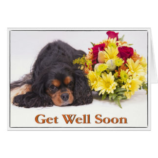 Get Well Cavalier King Charles Spaniel Card