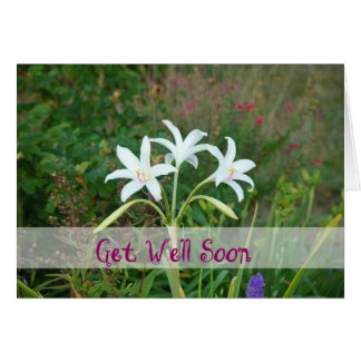 Get Well-Crinum Lily Card