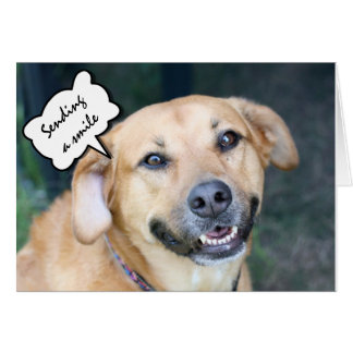 Get Well Hugs, Kisses & Smiles Cute Smiling Dog Card