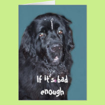 Get Well~ Newfoundland Dog Card