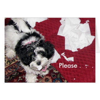 Get Well Puppy  . Greeting Card
