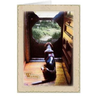 Get well soon  -Basset Hound Card