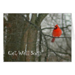 """""""get Well Soon""""/bright Red Cardinal On Tree Branch Card at Zazzle"""