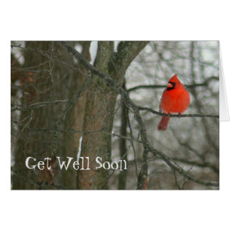"""GET WELL SOON""/BRIGHT RED CARDINAL ON TREE BRANCH CARD"