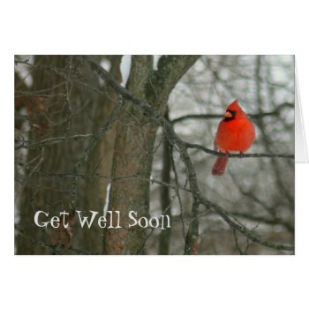 """""""get Well Soon""""/bright Red Cardinal On Tree Branch Card by whatawonderfulworld at Zazzle"""