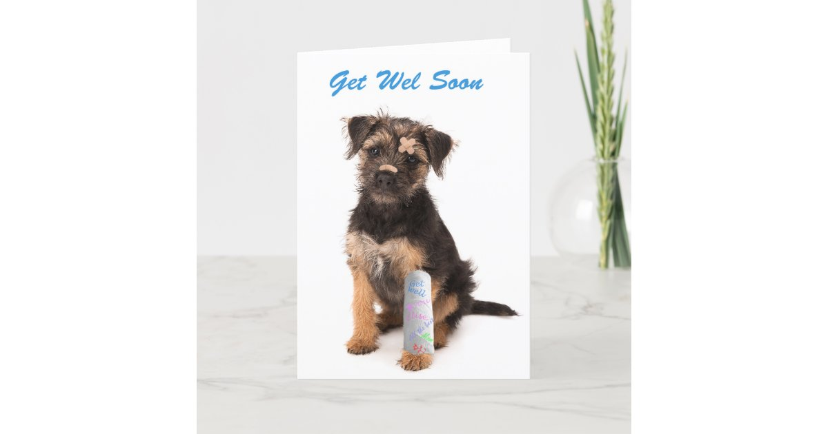 Get Well Soon Card Border Terrier Dog