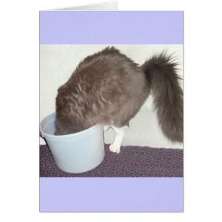Get Well Soon Cat Card