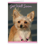 Get Well Soon Chihuahua greeting card