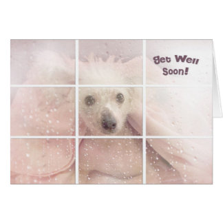 Get Well Soon-Chinese Crested Hairless Dog Greeting Cards