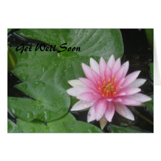 Get Well Soon Pink Water Lily  Notecard