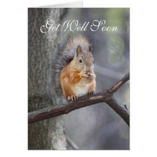 Get Well Soon Red Squirrel Greeting Card