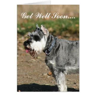 Get Well Soon Schnauzer dog greeting card