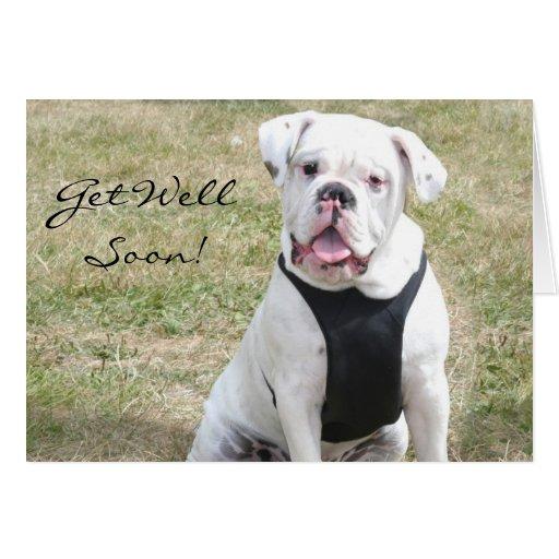Get Well Soon White Bulldog Greeting Card