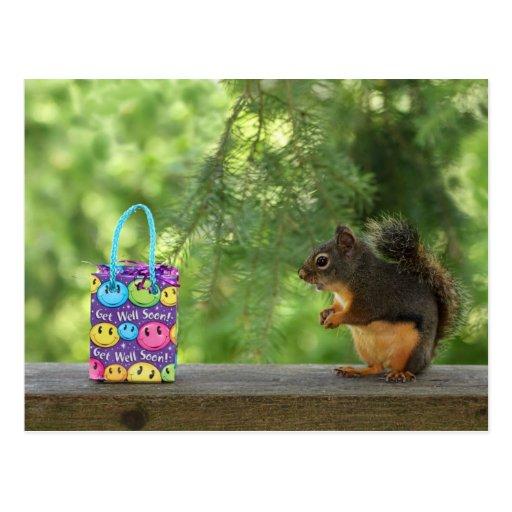 Get Well Squirrel Postcards