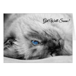 Get Well Wishes Siamese Cat Greeting Card