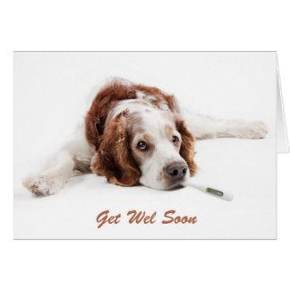 Get well with Welsch jumper spaniel dog Card
