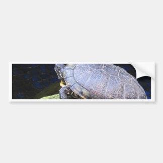 Getting a suntan Turtles Car Bumper Sticker
