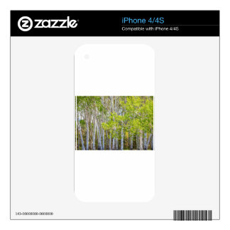 Getting Lost In the Wilderness Decal For The iPhone 4
