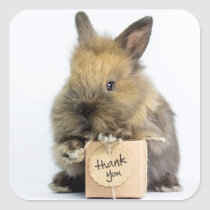 Getty Images | Dwarf Rabbit Square Sticker
