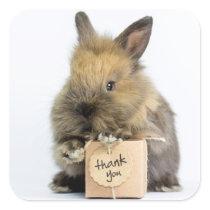 Getty Images | Dwarf Rabbit Square Sticker
