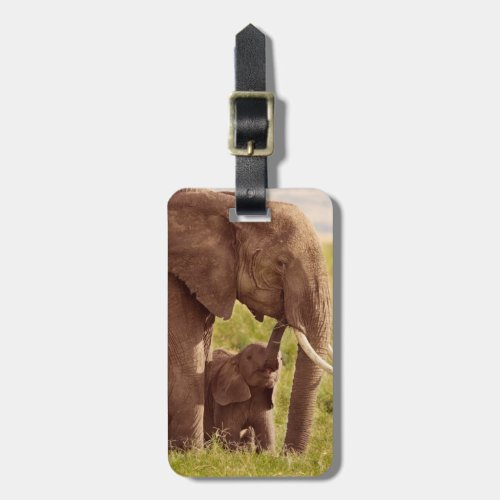Getty Images  Elephant  Baby Luggage Tag
