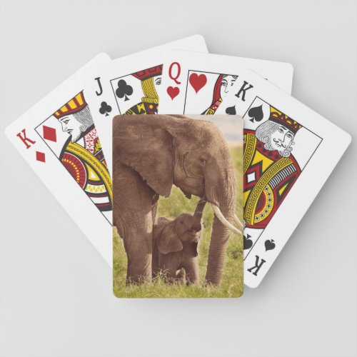 Getty Images  Elephant  Baby Playing Cards