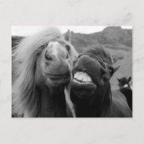 Getty Images | Smiling Horses Postcard