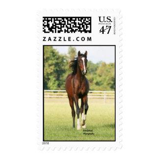 GF Tensaw Stamp