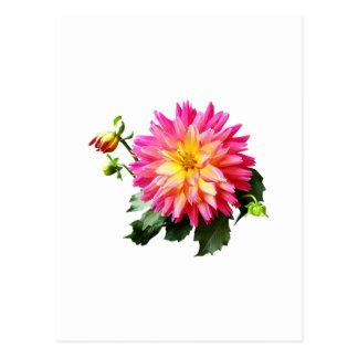 Gft_VividPinkAndYellowDahliaVivid Pink and Yellow Postcard