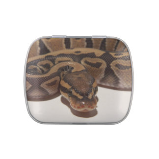 Ghost Ball Python Jelly Belly Tin