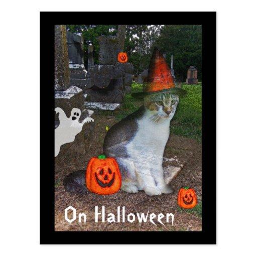 Ghost Cat Postcard
