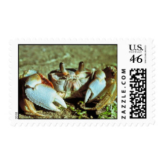 Ghost Crab Stamps