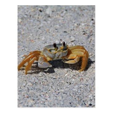 Beach Themed Ghost Crab Postcard
