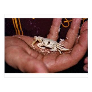 Ghost Crab Postcards