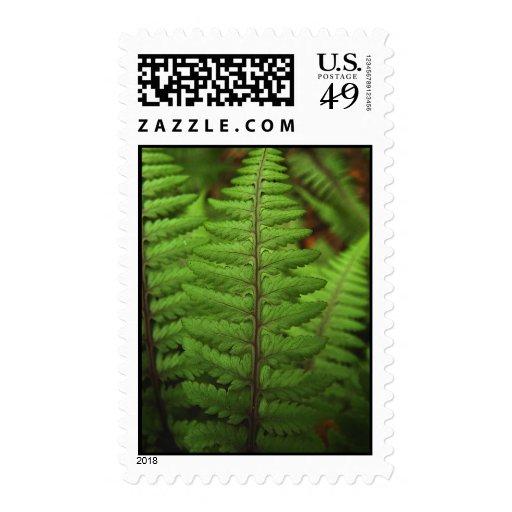 Ghost Fern Leaf Postage Stamp