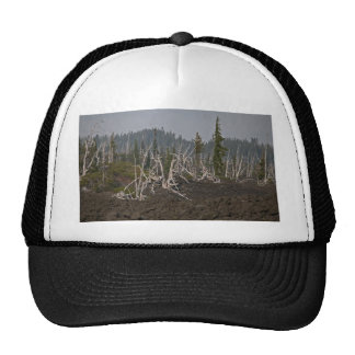 Ghost Forest in Lava, Old McKenzie Hwy Hats