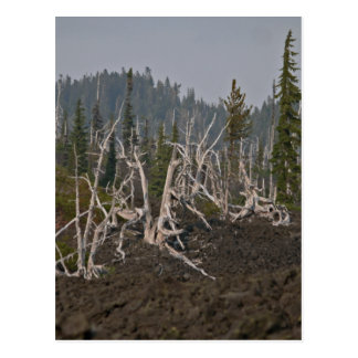Ghost Forest in Lava, Old McKenzie Hwy Post Cards