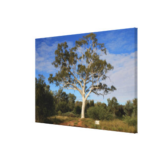 Ghost gumtree, Outback Australia Canvas Print