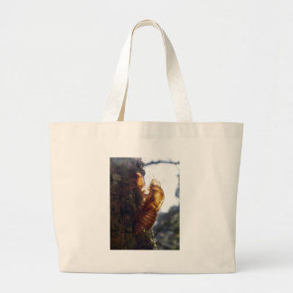 Ghost of a Shell Bag