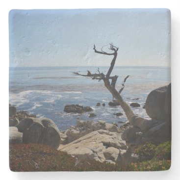 EverydayLifeSF Ghost Tree – Scenic 17 Mile Drive Coaster
