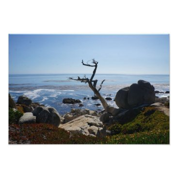 everydaylifesf Ghost Tree - Scenic 17 Mile Drive Photo Print