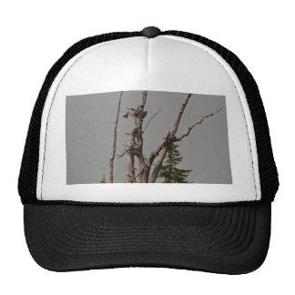 Ghost Trees, McKenzie Pass, Oregon Mesh Hats