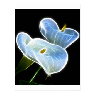 Ghostly Calla Lilies Postcards