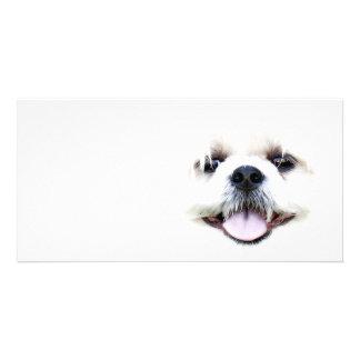 Ghostly dog card