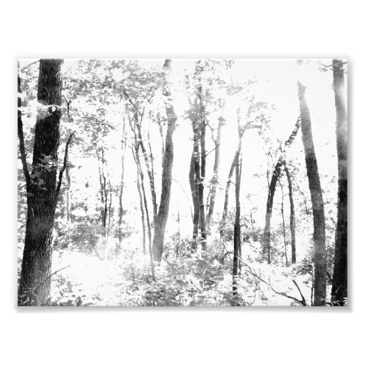 Ghostly Forest Photo Print