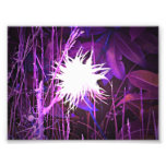 Ghostly Plant Purple Art Photo