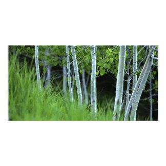 Ghosttrees Tarjetas Fotográficas