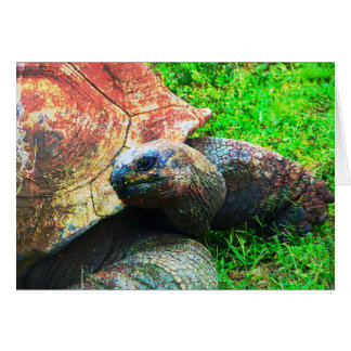 Giant Aldabra Tortoise Grunge, Kansas City Zoo Card